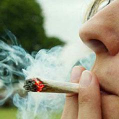 Consumidores de cannabis sufren alteraciones cognitivas